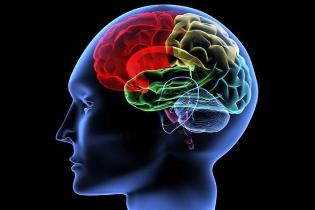 Как натренировать суперпамять: советы рекордсмена по запоминанию и тренера по развитию мозга
