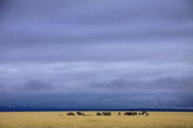30 лучших фотографий природы, сделанных исследователями