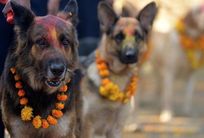 У индуистов есть целый фестиваль, чтобы благодарить собак за верность и преданность