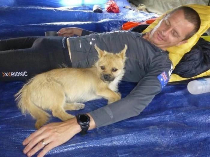 Собаки, которые нас выбирают: экстремальный марафон