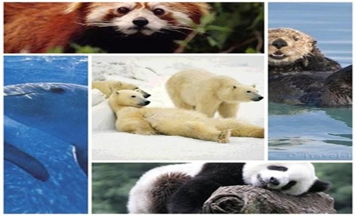 Зверская ржака! Картинки о смешных животных