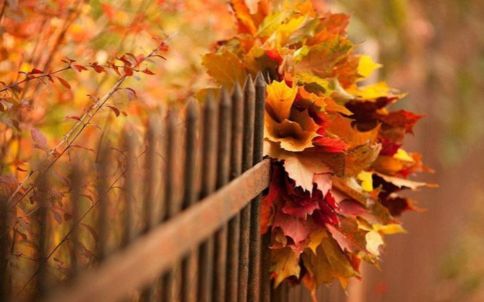 Советы психолога: как победить осеннее уныние