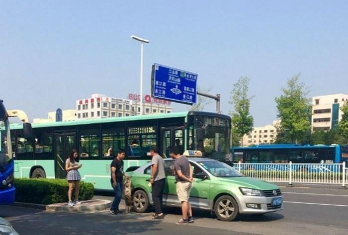 Обезьяна перехватила руль у водителя такси и едва не устроила ДТП