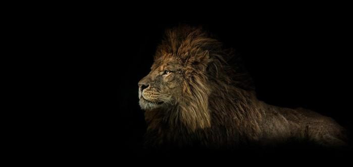 Топ 10 талантливых фотографов дикой природы и их потрясающие фотографии животных