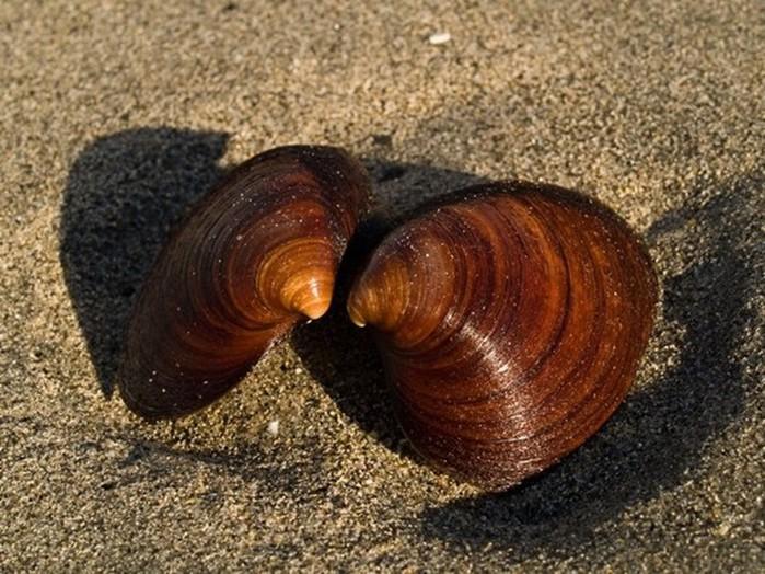От морского ежа до старушки черепахи: животные долгожители