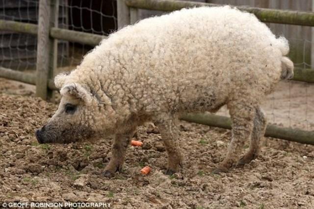 Кроточерви и оленемыши: 20 странных животных, скрещенных непонятно с кем