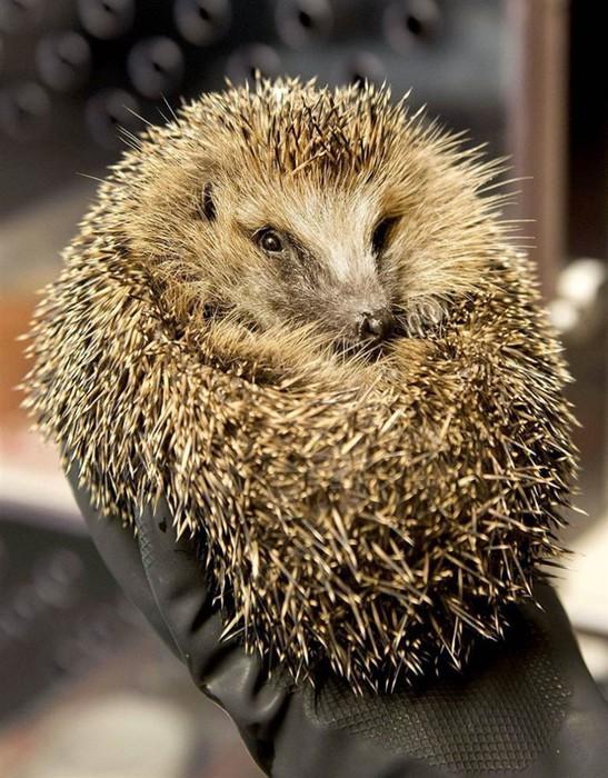 В мире животных: подборка фотографий, сделанных в зоопарках мира