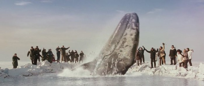 Места и страны где увидеть китов: календарь туриста