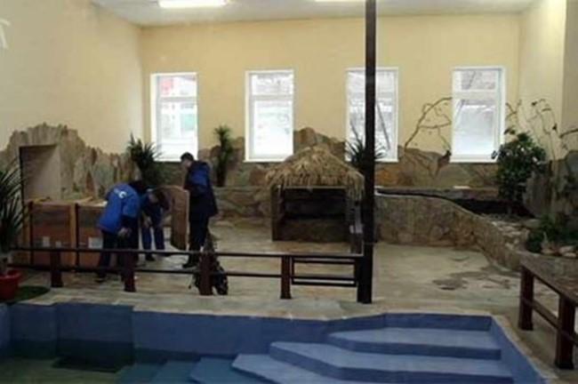 Карликовый бегемот в зоопарке Екатеринбурга