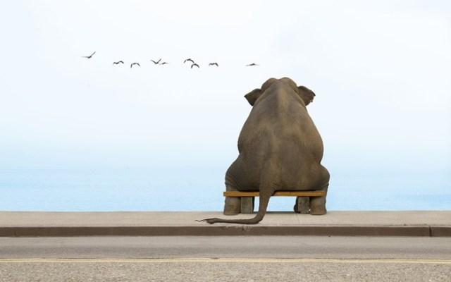 Сколько стоит слон? Как купить слона и привезти домой?
