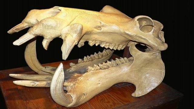 Что такое ископаемое? Три типа ископаемых