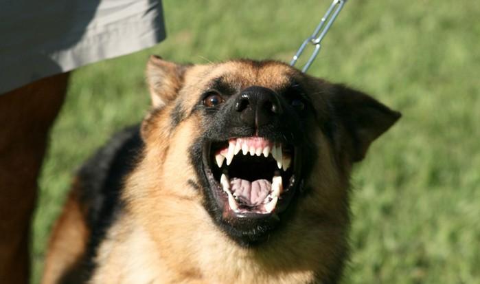 Какие собаки кусают больнее всего