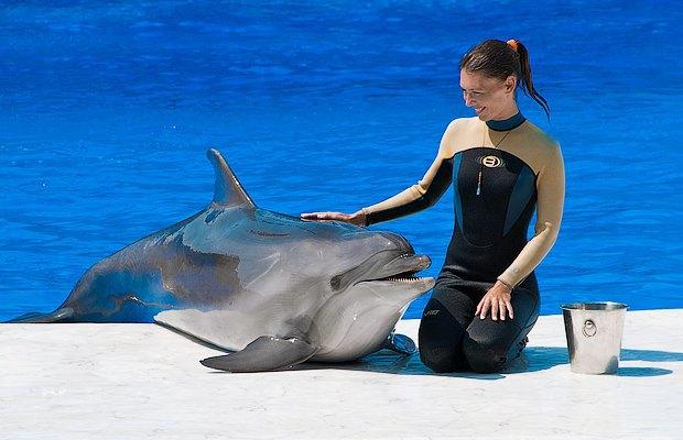 Занимательные факты о дельфинах