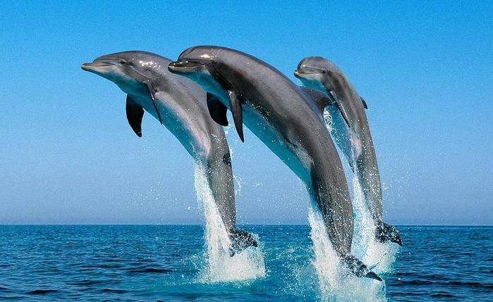 Занимательные факты о дельфинах, которые удивляют