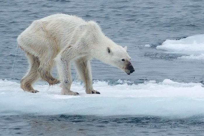Как изменится климат на Земле, если остынет Гольфстрим