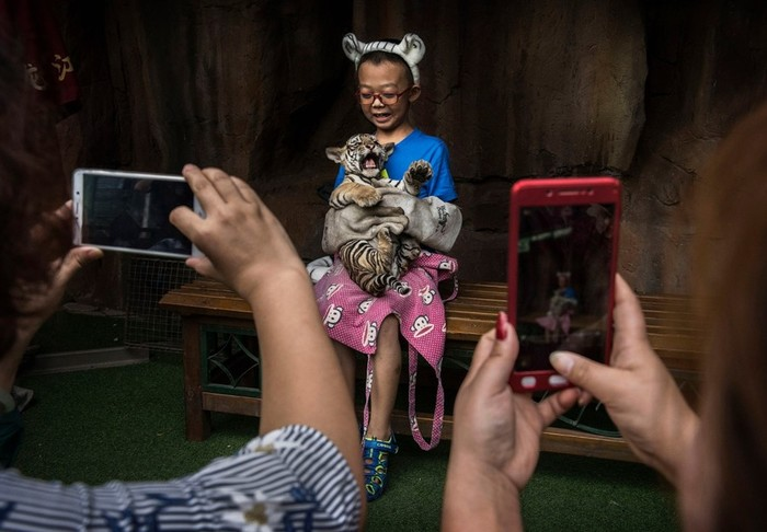 Китайский центр по разведению амурских тигров