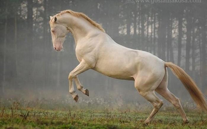 Самые красивые породы лошадей, от которых просто не отвести глаз!