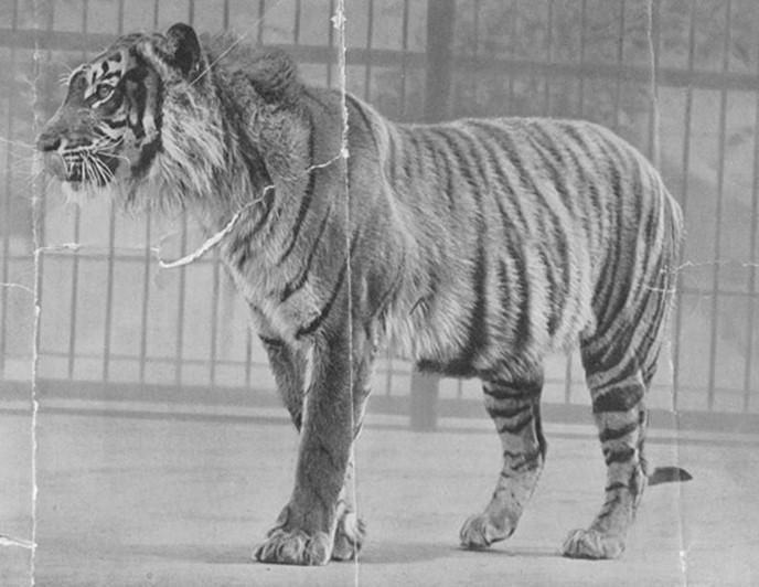 8 видов животных, вымерших за нашу жизнь