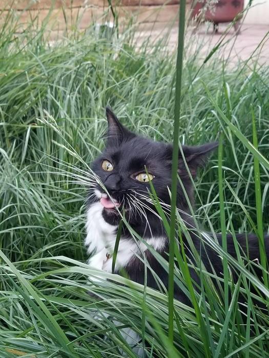 12 объяснений, после которых станут понятны странные привычки кошек