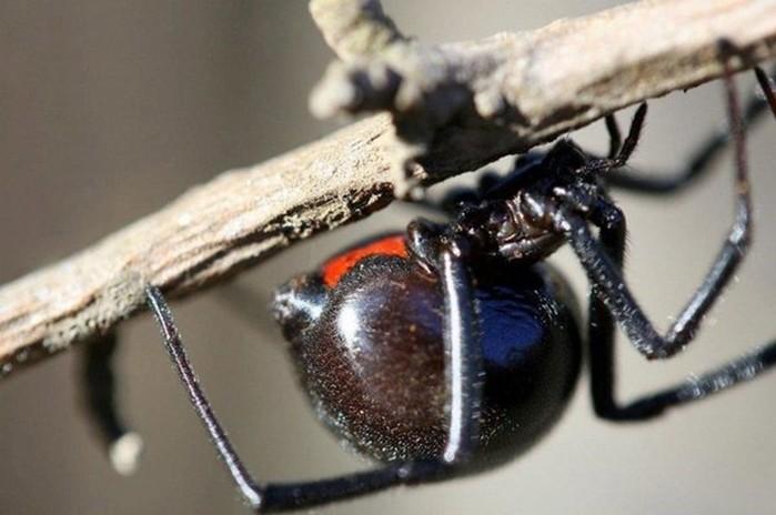 10 самых опасных насекомых в мире