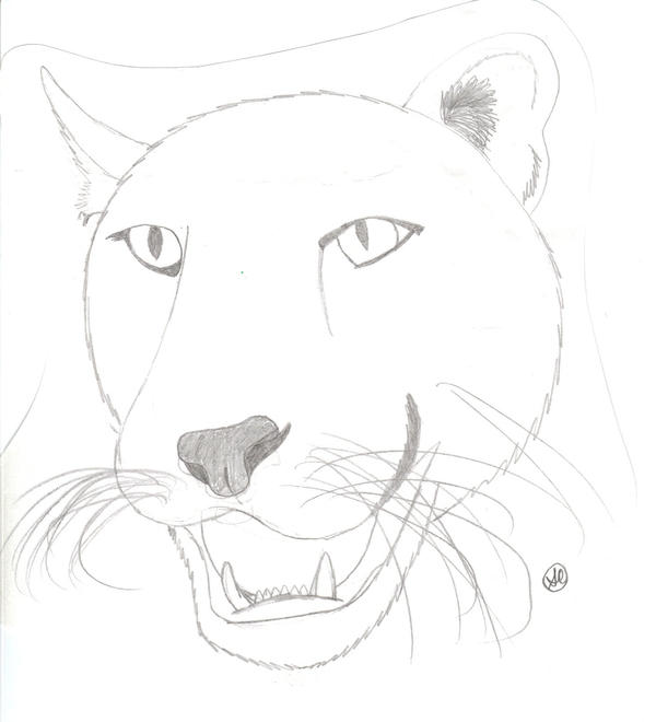 Cougar Head LineArt by jellybean839 on DeviantArt