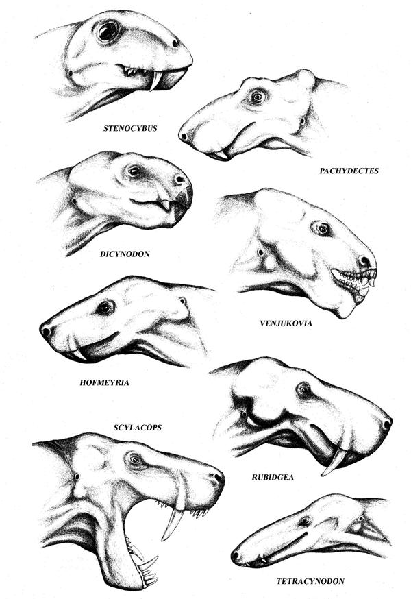 therapsids reconstructions by mojcaj on DeviantArt