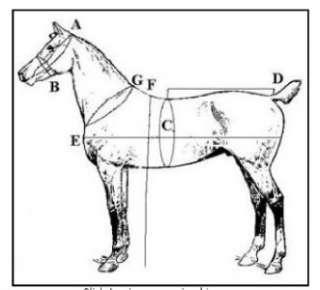 Horse Collar Harness Hames Mirror