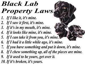 BLACK LAB Drawing hunting Dog Art ACEO Print Signed DJR