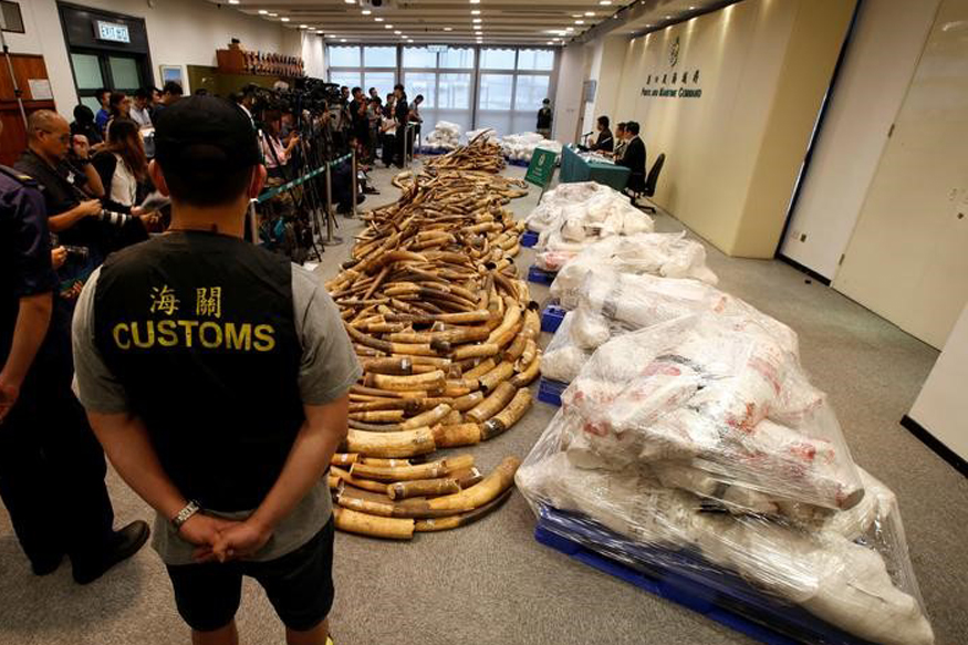 Hong Kong Seizes Largest Ivory Haul in 30 Years