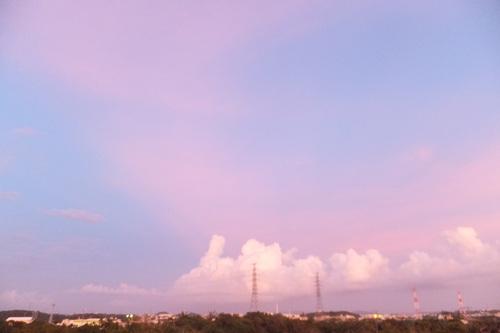 花の畫像について: ぜいたく空 ピンク 水色
