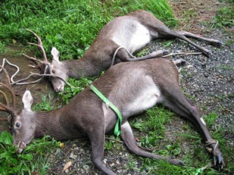 「鹿 駆除」の画像検索結果