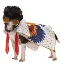 Pet Dog Funny Pup A Razzi Rock N Roll Super Music Star ...