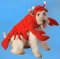 Dog Crab Costume - Bing images