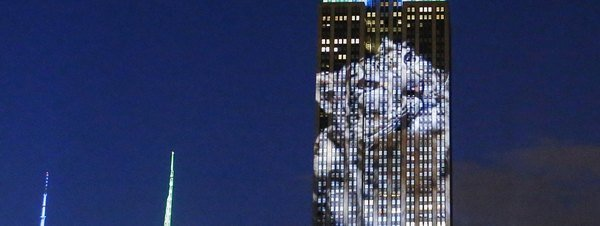 El Empire State se solidariza con Cecil y los animales en peligro de extinción