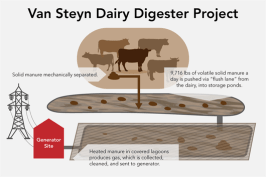 Van Steyn Dairy