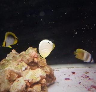3/14 海水魚入荷しました│ペットボックス沖縄ビアンコのスタッフブログ