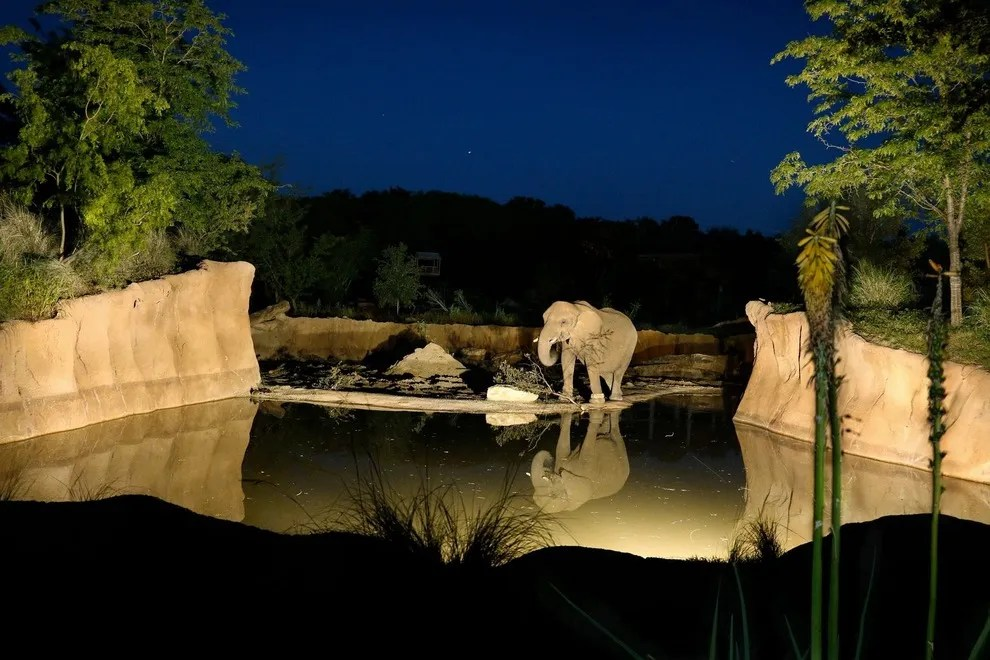 Halloween Nights at Dallas Zoo Family Fun with the Animals Attractions Article by 10Bestcom
