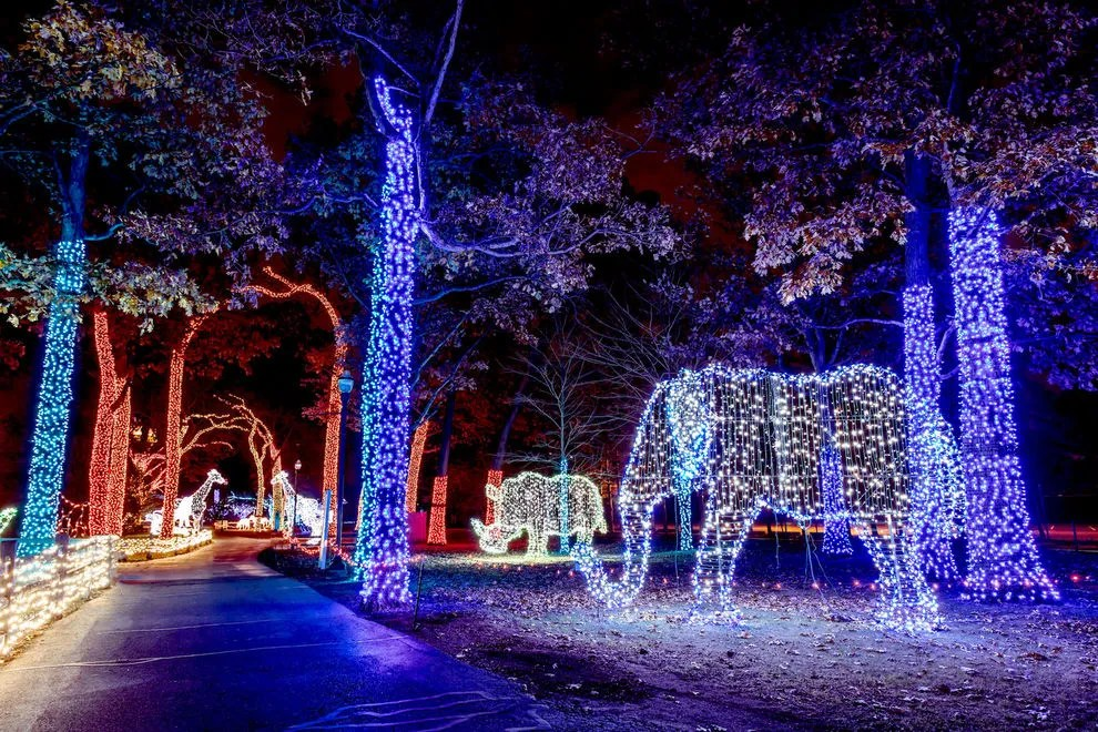 Dallas Zoo Christmas Lights