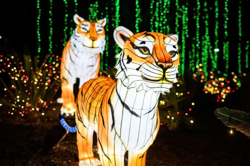 Zoo Lights Columbus Hours
