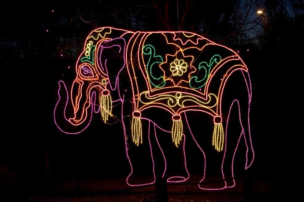Wild Lights Denver Zoo