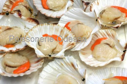 Frozen Atlantic Sea Scallops productsCanada Frozen