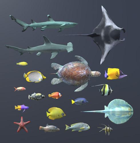 Fish Tank 3d Wallpaper Download Coral Fish Pack 1 3d Model Cgtrader