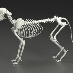 Chicken Skeleton Diagram Labelled Of Nerve Cell 3d Model Cat | Cgtrader