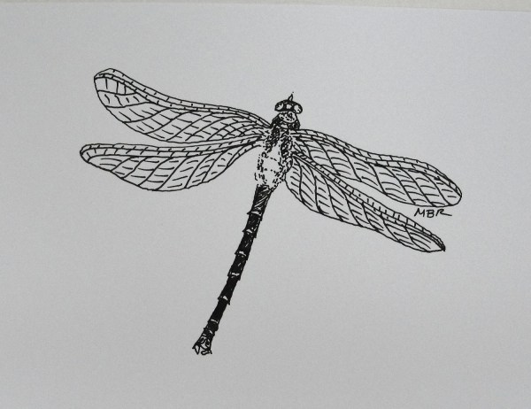 Original Art Ink Drawing Dragonfly Black And White Insect