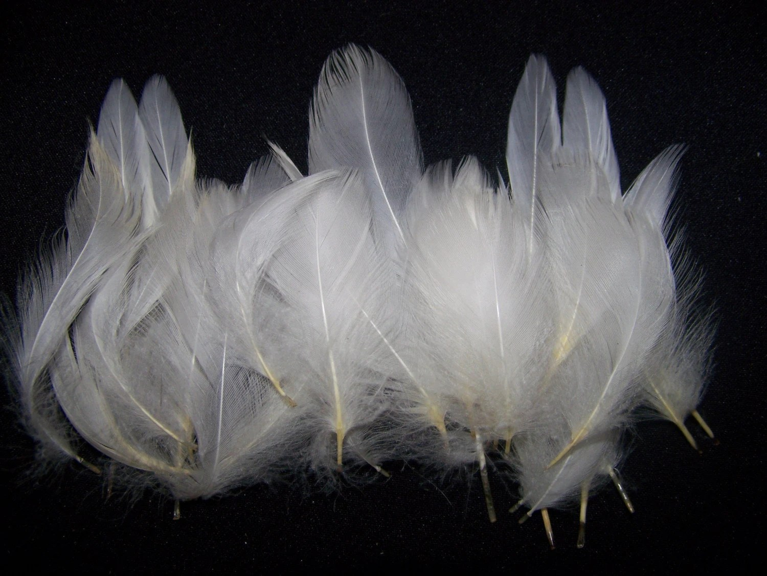 White Pekin Duck Feathers by SevenArrowsShoppe on Etsy