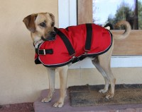 Extra Warm Winter Dog Coat size 16 17 waterproof and