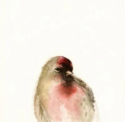 Red- Male Redpoll Archival print of watercolor, bird art, nature, woodland - amberalexander