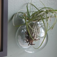 Wall Mounted Glass Globe for Air Plants or a Small Terrarium
