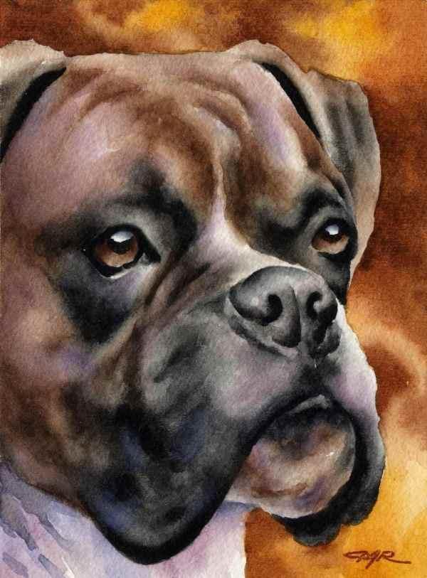 Boxer Art Print Signed Artist Dj Rogers