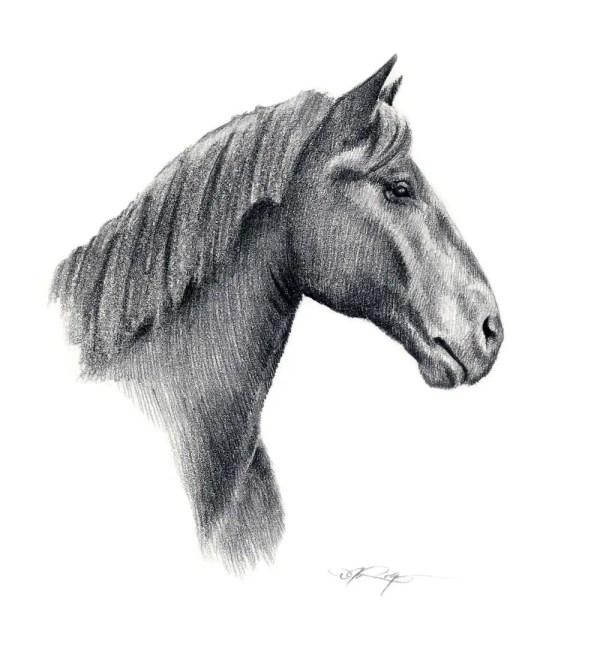 Percheron Horse Pencil Drawing Art Print Signed Artist Dj